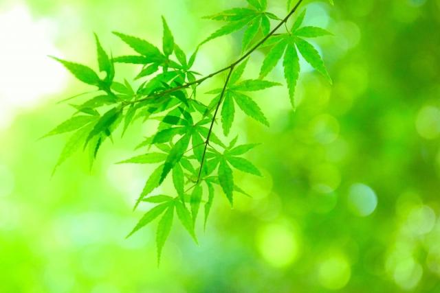 グリーン葉